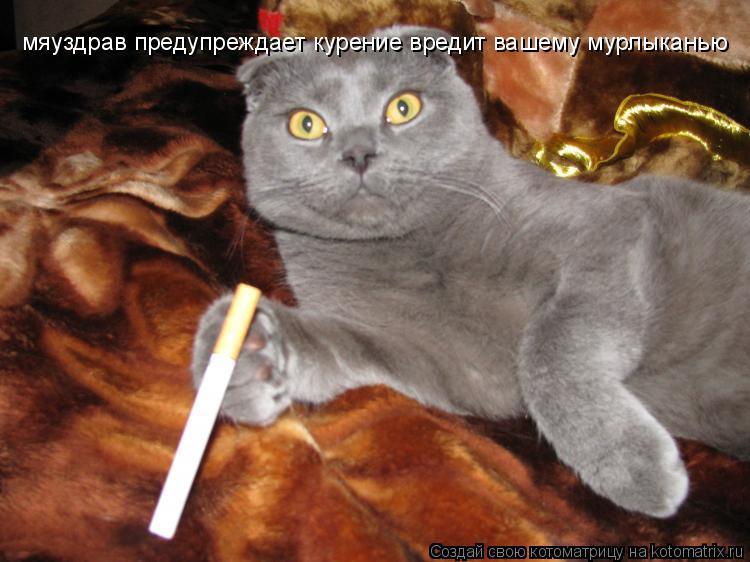 Котоматрица: мяуздрав предупреждает курение вредит вашему мурлыканью