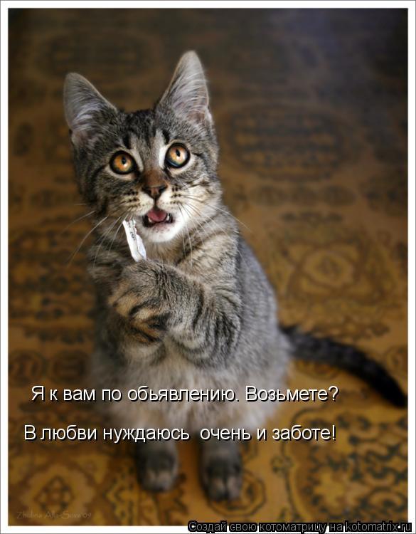 Котоматрица: Я к вам по обьявлению. Возьмете? В любви нуждаюсь  очень и заботе!