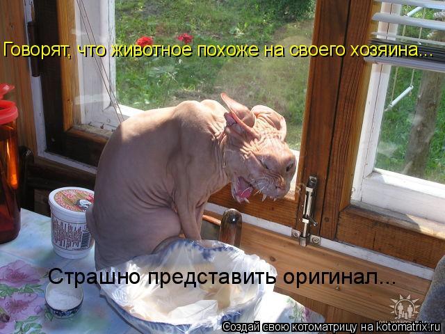 Котоматрица - Говорят, что животное похоже на своего хозяина... Страшно представить