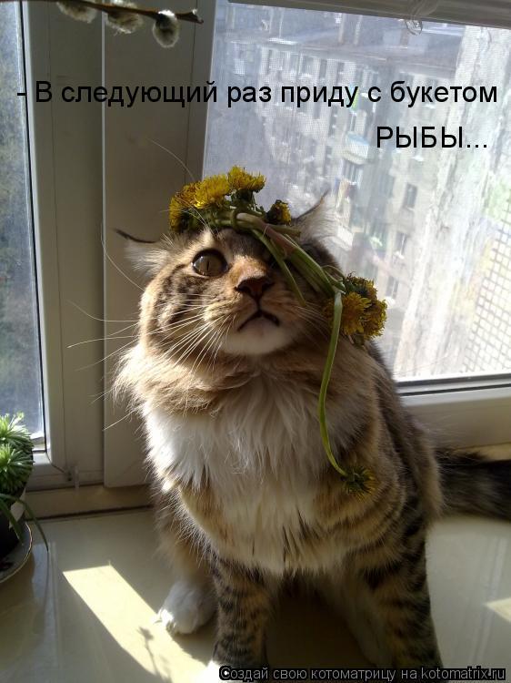 http://kotomatrix.ru/images/lolz/2011/06/01/920203.jpg