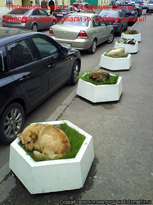 """Котоматрица: """"Городские цветы, Городские цветы..."""" Навсегда арендовали их собаки и коты!"""