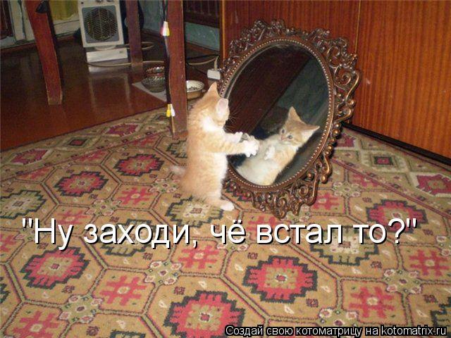 "Котоматрица: ""Ну заходи, чё встал то?"""