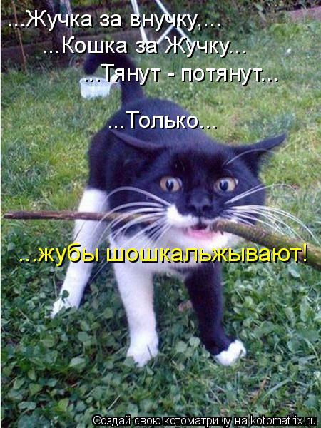 Котоматриця!)))) - Страница 7 920584