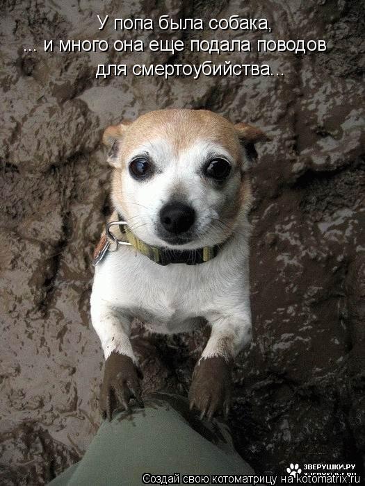 Котоматрица - У попа была собака, ... и много она еще подала поводов для смертоубийс
