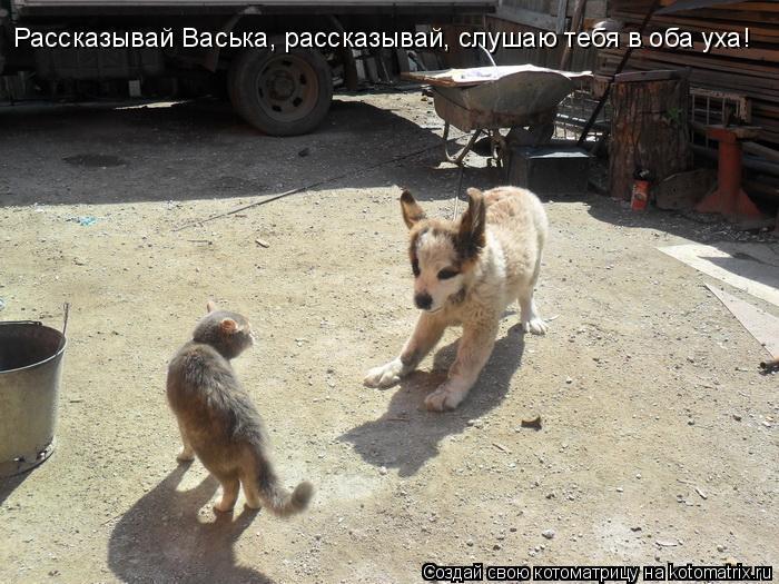 Котоматрица: Рассказывай Васька, рассказывай, слушаю тебя в оба уха!