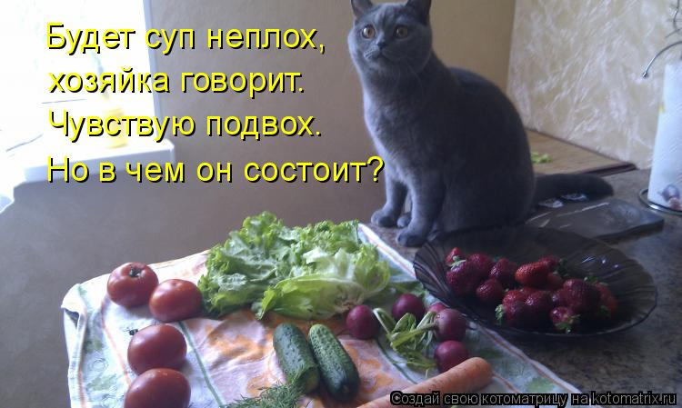 Котоматрица: Будет суп неплох, хозяйка говорит. Чувствую подвох. Но в чем он состоит?