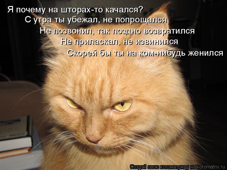 Котоматрица - Я почему на шторах-то качался? С утра ты убежал, не попрощался Не позв
