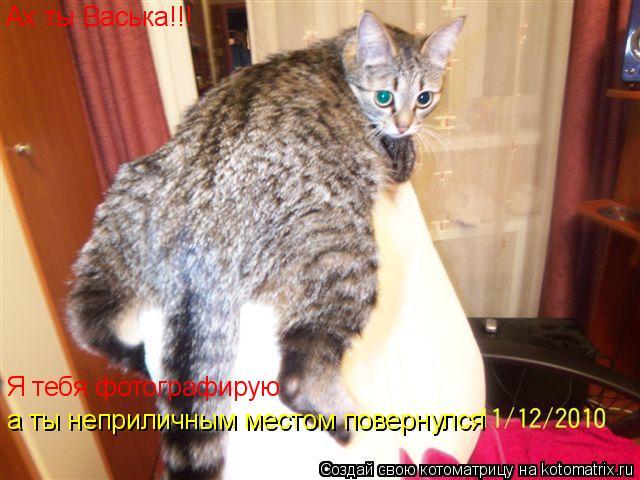 Котоматрица: Ах ты Васька!!! Я тебя фотографирую  а ты неприличным местом повернулся