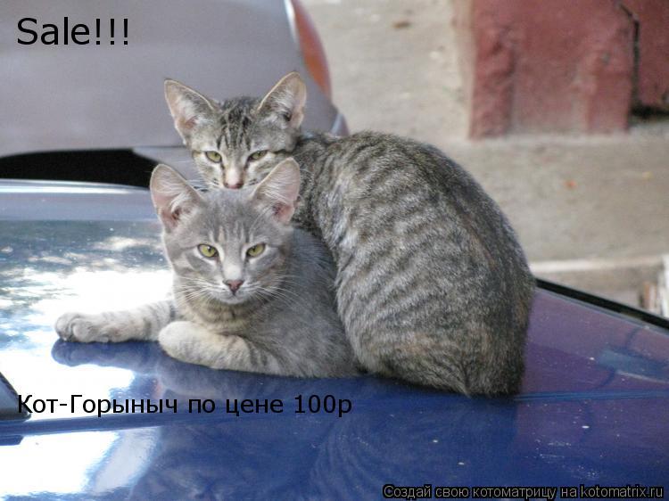 Котоматрица: Sale!!! Кот-Горыныч по цене 100р