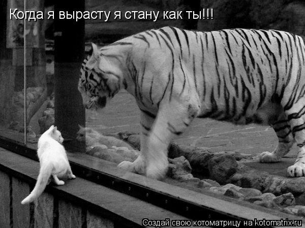 Котоматрица: Когда я вырасту я стану как ты!!!