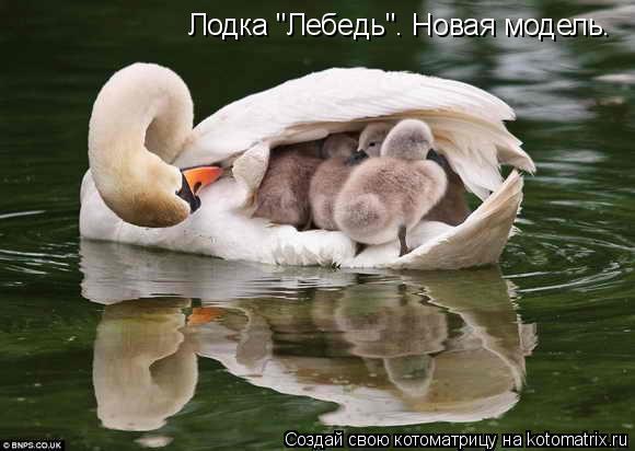 """Котоматрица: Лодка """"Лебедь"""". Новая модель."""