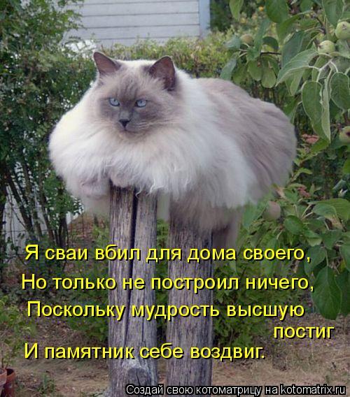 Котоматрица - Я сваи вбил для дома своего, Но только не построил ничего, постиг  Пос
