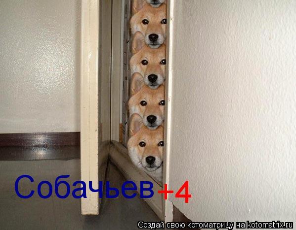 Котоматрица: Собачьев +4