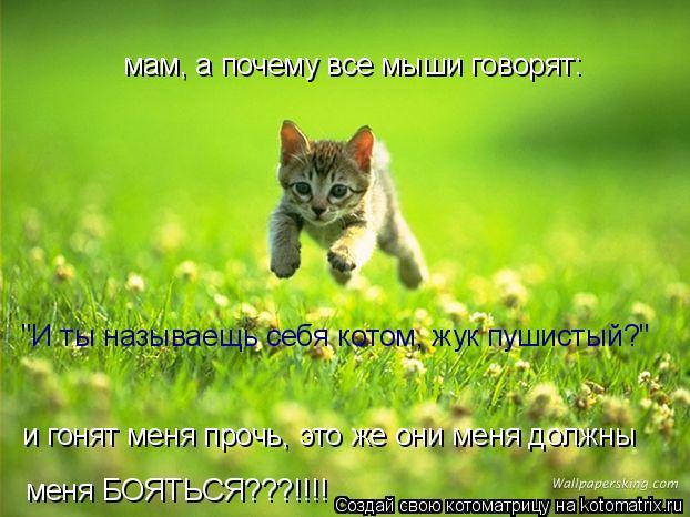"""Котоматрица: мам, а почему все мыши говорят: """"И ты называещь себя котом, жук пушистый?"""" и гонят меня прочь, это же они меня должны меня БОЯТЬСЯ???!!!!"""