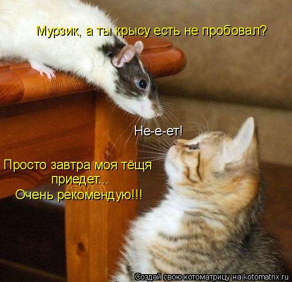 Котоматрица - Мурзик, а ты крысу есть не пробовал? Не-е-ет! Просто завтра моя тёщя п