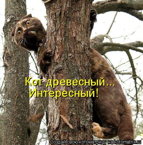 Котоматрица: Кот древесный... Интересный!