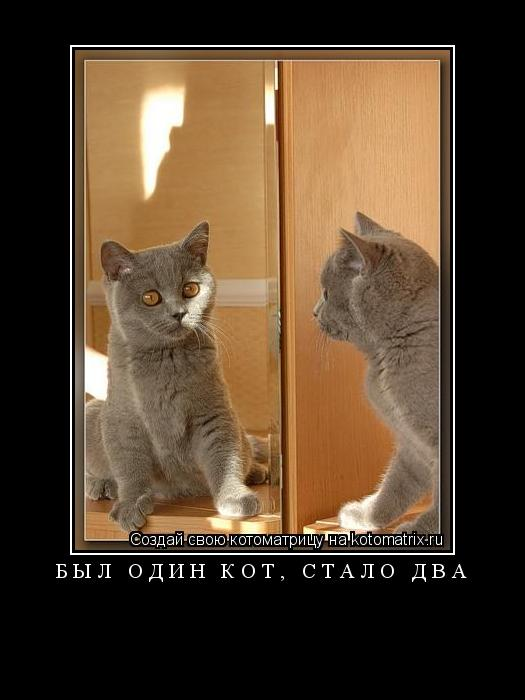 Котоматрица: был один кот, стало два