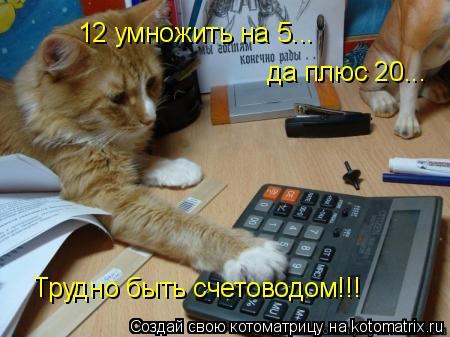 Котоматрица: 12 умножить на 5... да плюс 20... Трудно быть счетоводом!!!