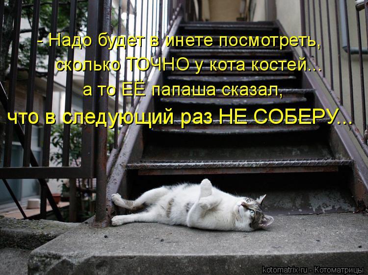 Котоматрица: сколько ТОЧНО у кота костей... - Надо будет в инете посмотреть, а то ЕЕ папаша сказал, что в следующий раз НЕ СОБЕРУ... ..