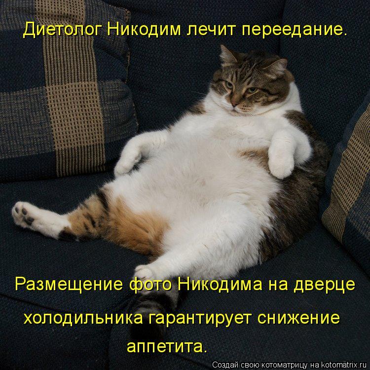 Котоматрица: Диетолог Никодим лечит переедание. Размещение фото Никодима на дверце холодильника гарантирует снижение аппетита.
