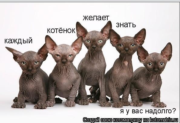 Котоматрица - каждый  котёнок  желает знать  я у вас надолго?