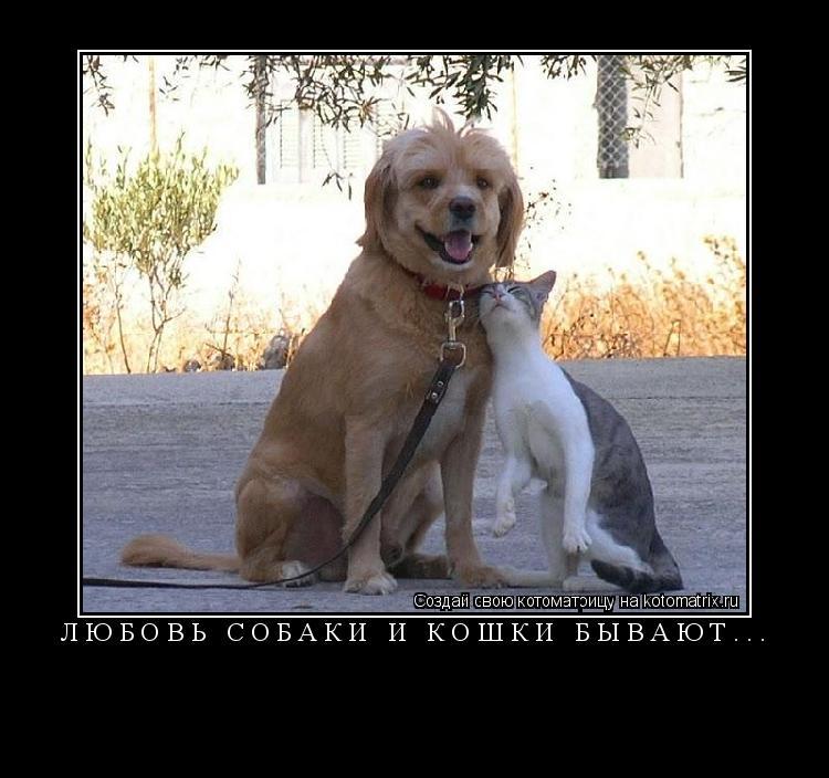 Котоматрица: Любовь собаки и кошки бывают...