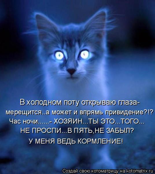 Котоматрица: В холодном поту открываю глаза- мерещится..а может и впрямь привидение?!? Час ночи......- ХОЗЯИН...ТЫ ЭТО...ТОГО... НЕ ПРОСПИ...В ПЯТЬ,НЕ ЗАБЫЛ? У МЕН