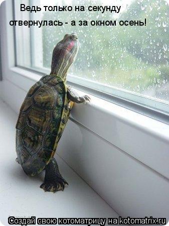Котоматрица: Ведь только на секунду  отвернулась - а за окном осень!