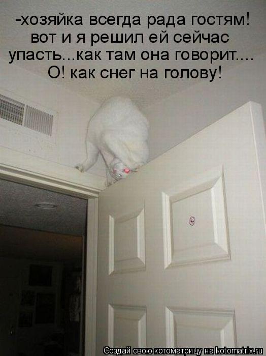 Котоматрица: -хозяйка всегда рада гостям! вот и я решил ей сейчас упасть...как там она говорит.... О! как снег на голову!