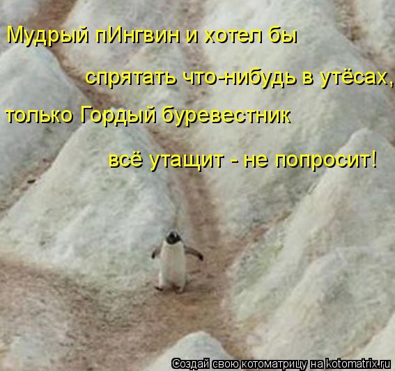 Котоматрица: Мудрый пИнгвин и хотел бы  спрятать что-нибудь в утёсах, только Гордый буревестник всё утащит - не попросит!