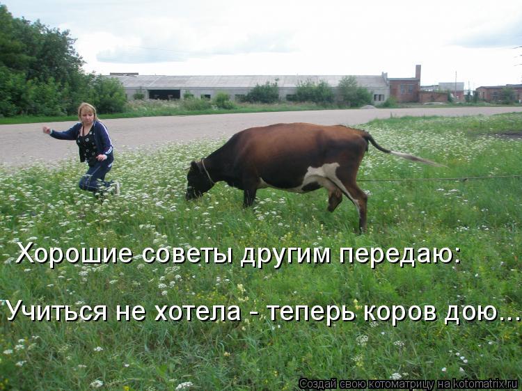 Котоматрица: Хорошие советы другим передаю: Учиться не хотела - теперь коров дою...