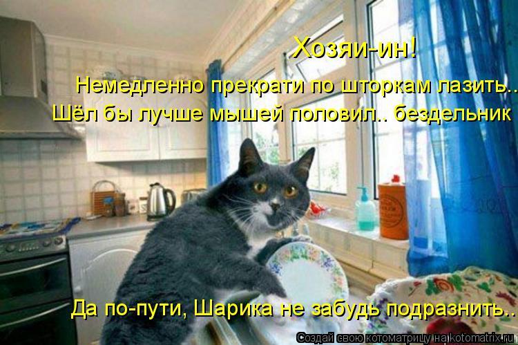 Котоматрица - Хозяи-ин!  Немедленно прекрати по шторкам лазить.. Шёл бы лучше мышей