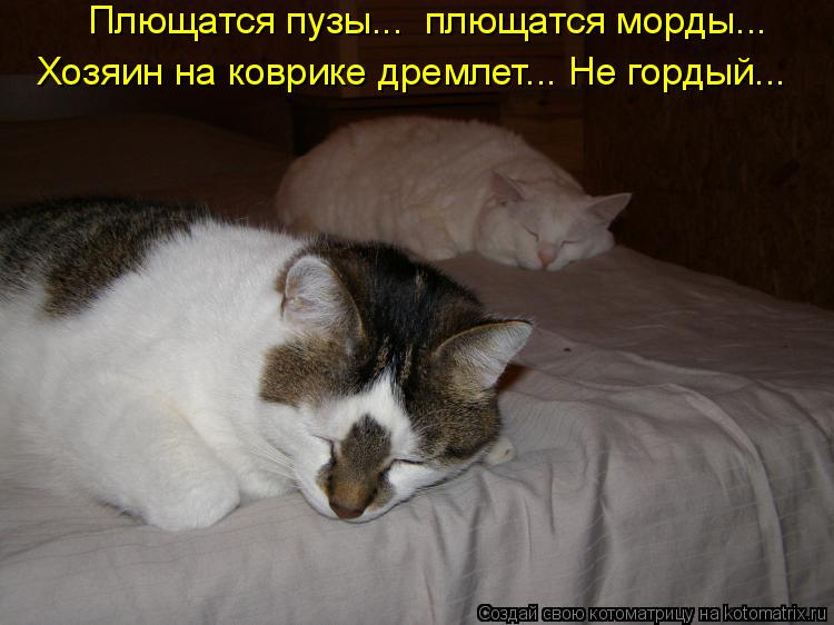 Котоматрица - Плющатся пузы...  плющатся морды... Хозяин на коврике дремлет... Не го