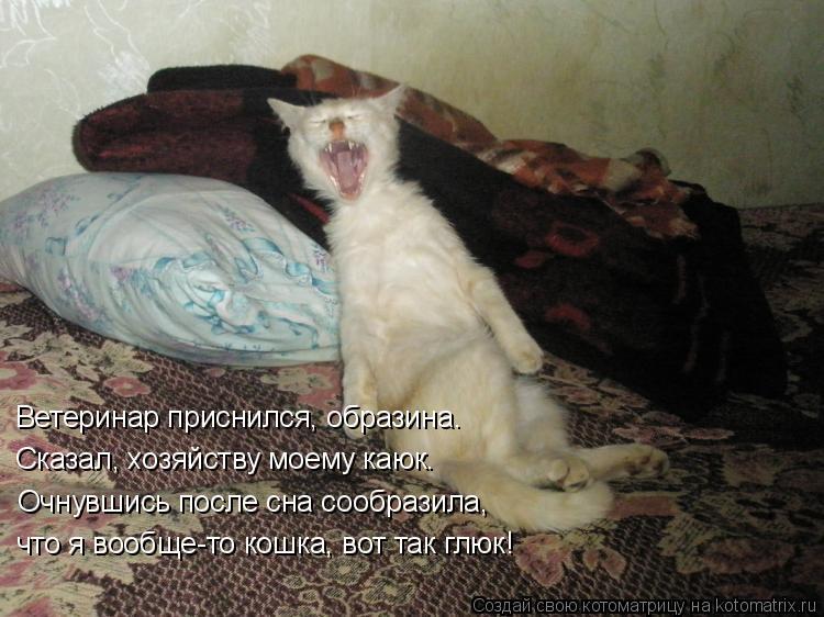 Котоматрица: Ветеринар приснился, образина. Сказал, хозяйству моему каюк. Очнувшись после сна сообразила, что я вообще-то кошка, вот так глюк!