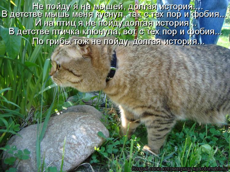 Котоматрица - Не пойду я на мышей, долгая история.... В детстве мышь меня куснул, та