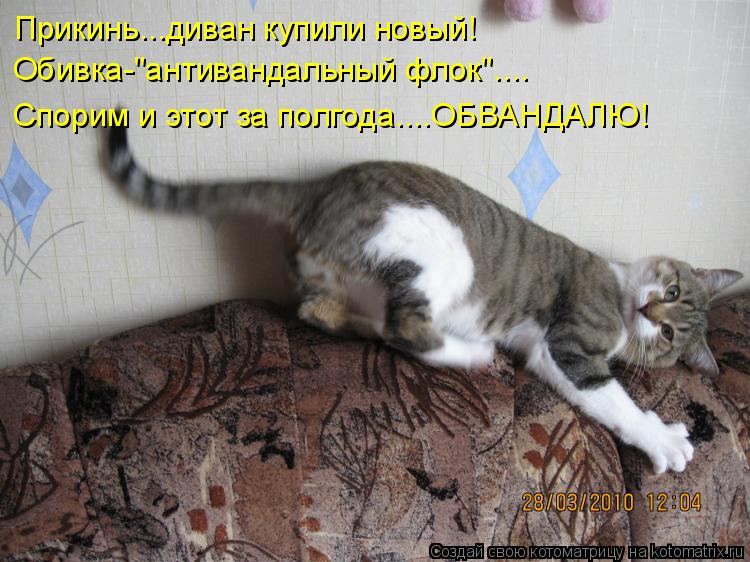 """Котоматрица - Прикинь...диван купили новый!  Обивка-""""антивандальный флок"""".... Спорим"""