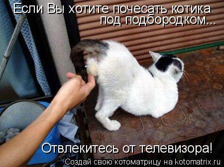 Котоматрица: Если Вы хотите почесать котика под подбородком... Отвлекитесь от телевизора!