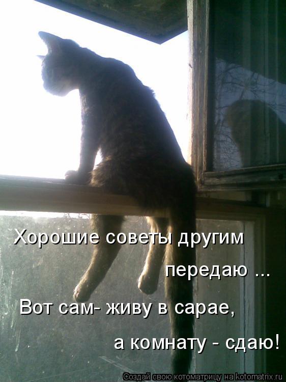 Котоматрица: Хорошие советы другим    Вот сам- живу в сарае,  а комнату - сдаю!  передаю ...