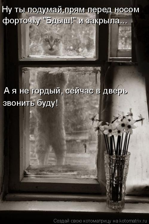 Котоматрица - Ну ты подумай,прям перед носом  А я не гордый, сейчас в дверь  звонить