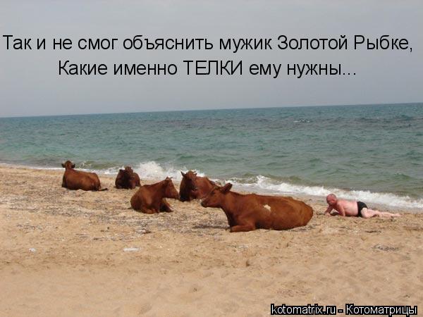 Котоматрица: Так и не смог объяснить мужик Золотой Рыбке, Какие именно ТЕЛКИ ему нужны...