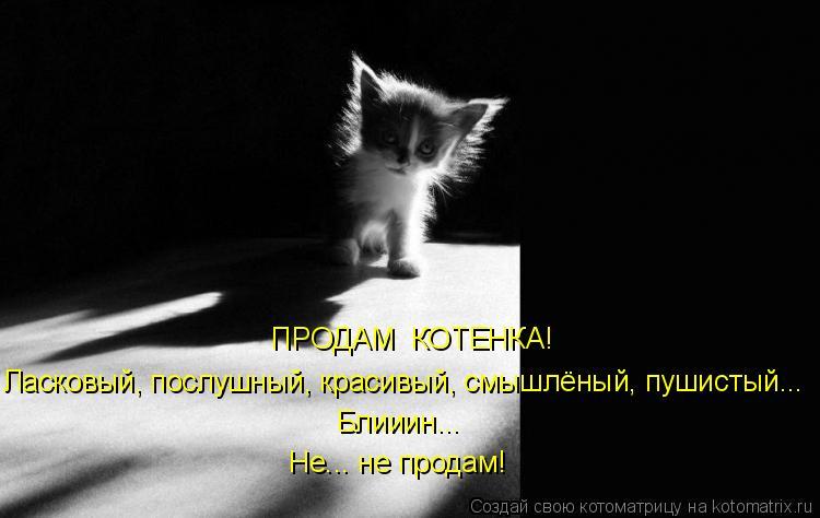 Котоматриця!)))) - Страница 7 924287