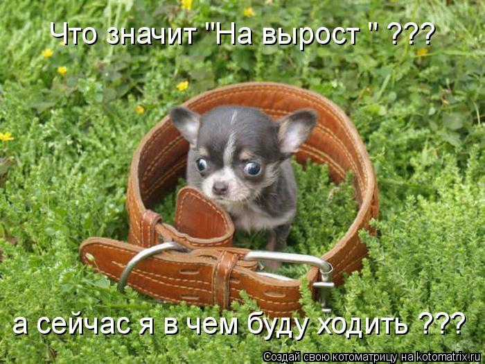 """Котоматрица: Что значит """"На вырост """" ??? а сейчас я в чем буду ходить ???"""