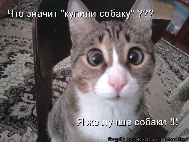 """Котоматрица: Что значит """"купили собаку"""" ??? Я же лучше собаки !!!"""