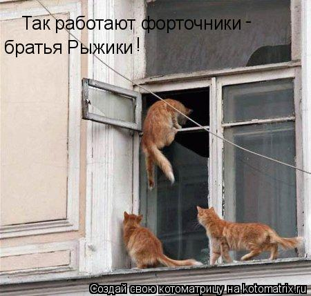 Котоматрица: Так работают форточники братья Рыжики - !