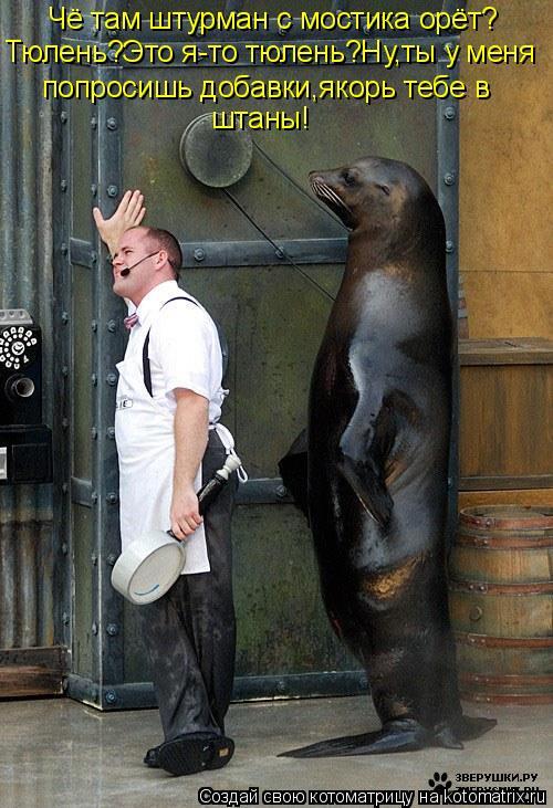 Котоматрица - Чё там штурман с мостика орёт? Тюлень?Это я-то тюлень?Ну,ты у меня поп