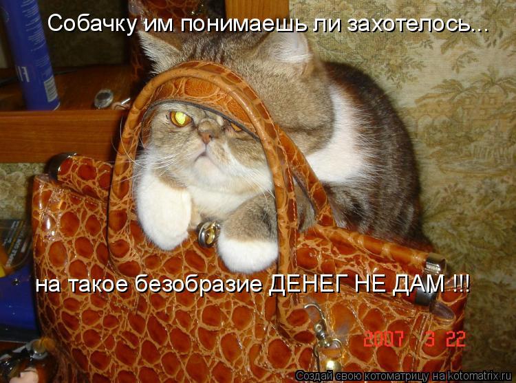 Котоматрица: Собачку им понимаешь ли захотелось... на такое безобразие ДЕНЕГ НЕ ДАМ !!!