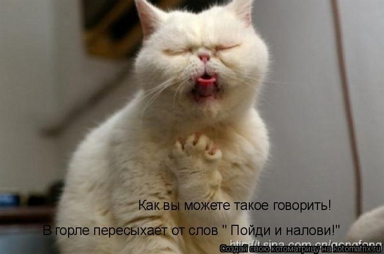 """Котоматрица: Как вы можете такое говорить! В горле пересыхает от слов """" Пойди и налови!"""""""