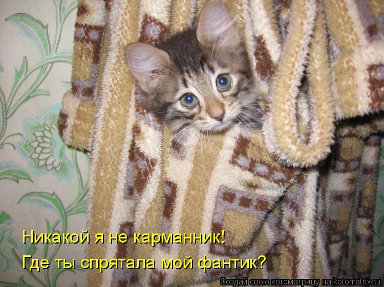 Котоматрица - Никакой я не карманник!   Где ты спрятала мой фантик?