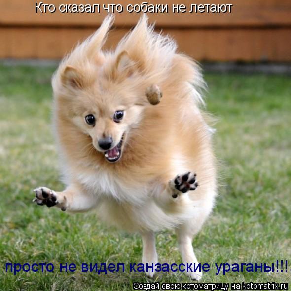 Котоматрица: Кто сказал что собаки не летают просто не видел канзасские ураганы!!!