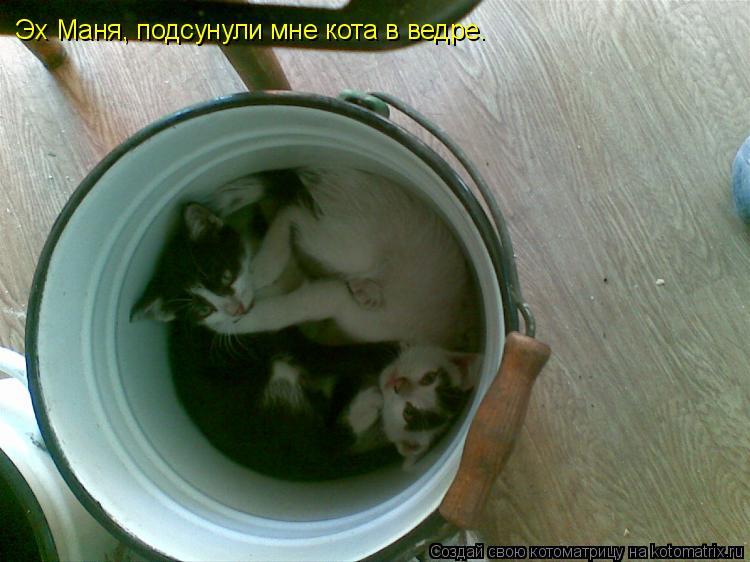 Котоматрица: Эх Маня, подсунули мне кота в ведре.